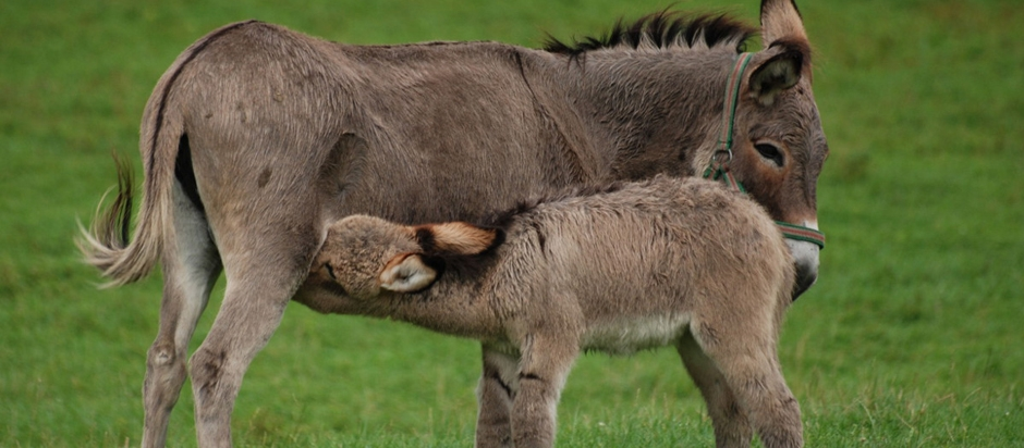 leave the donkey milk to the donkeys office for science and