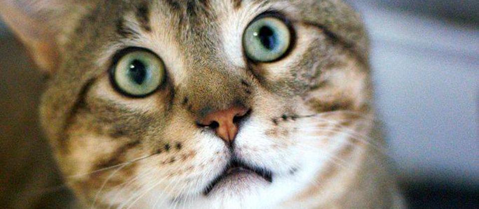 feline leukemia vaccine how long does it last