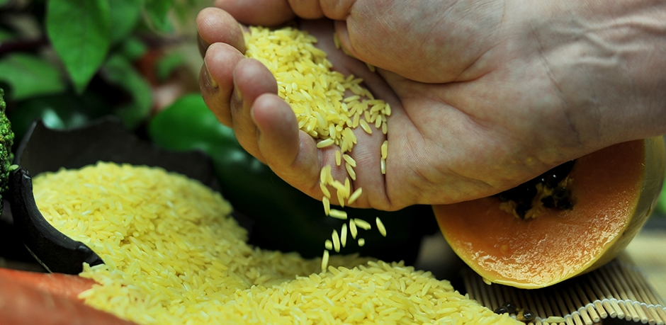science report golden rice Aaas login provides access to science for aaas members, and access to other journals in the science family to users who have purchased individual subscriptions but almost a decade after its invention, golden rice is still stuck in the lab.
