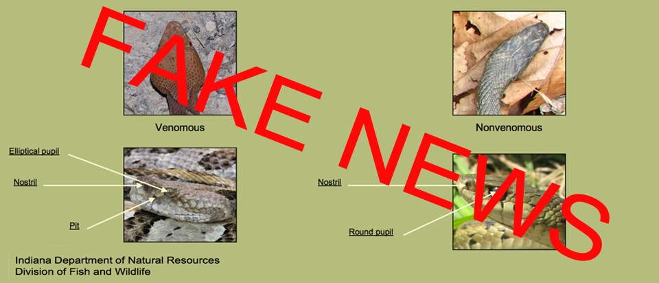 25c7db4a691a Fake Snake News  How Not to Identify a Poisonous Snake