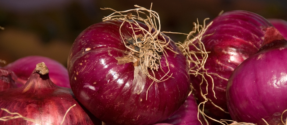 Onions absorbing bacteria
