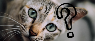 Why does cat urine smell so bad and what can I do about it