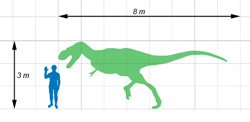 Size of Gorgosaurus compared to a human