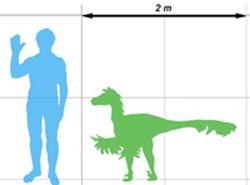 Dromaeosaurus size comparison