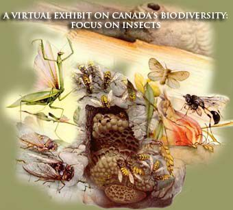 Virtual Exhibit on Canada's Biodiversity: Insects