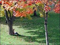 Tree tour