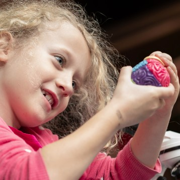 A young child holds and looks at a small model brain