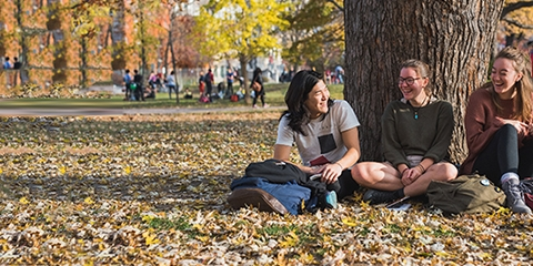 Students sitting by a tree and chatting