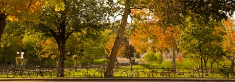 Trees in autumn on campus