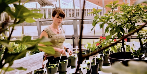 Macdonald Campus student in green house