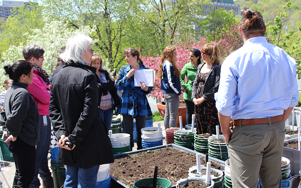 Staff members learning about gardening at Staff lunch and learn