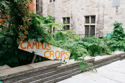 Campus Crops sign in a garden on the downtown McGill Campus, surrounded by greenery