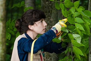 Student examining trees