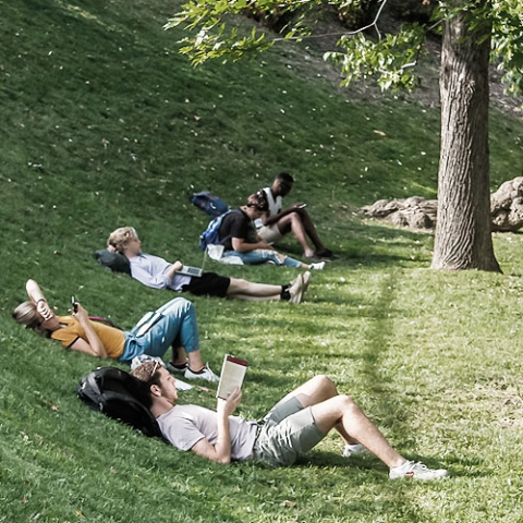 People lying on a hill, reading.