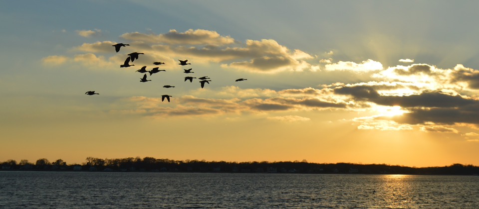 birds flying in a migration pattern over water with horizon in background
