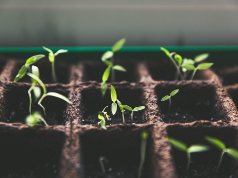plant sprouts in earth